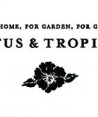 Cactus & Tropicals